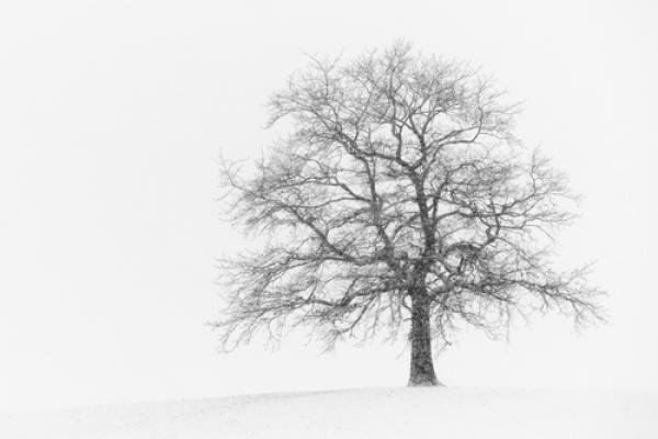 Wintersturm I