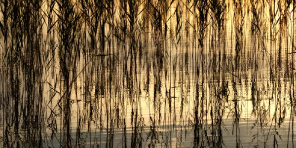 Reed Part I