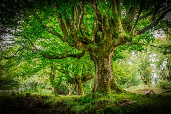 Otzarreta Forest I