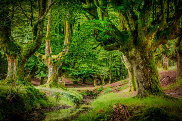 Otzarreta Forest II