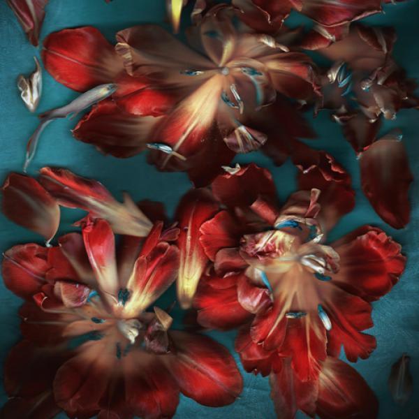 Tulpen auf blau