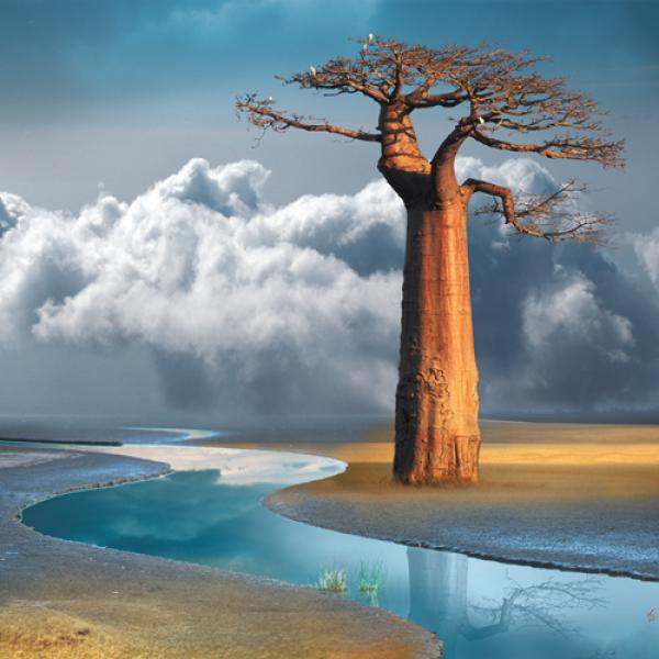 Le baobab du lac Natron
