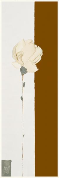 La rose blanche de mai