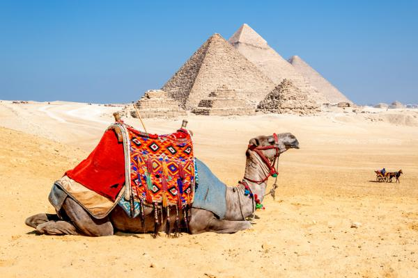 Camel Resting by the Pyramids, Giza, Egy