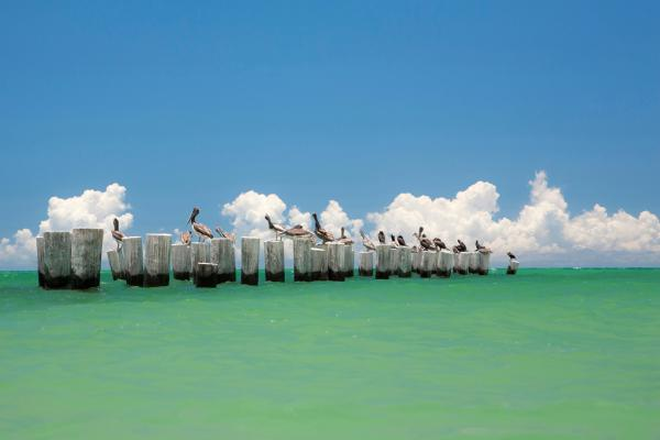 Gull Conference