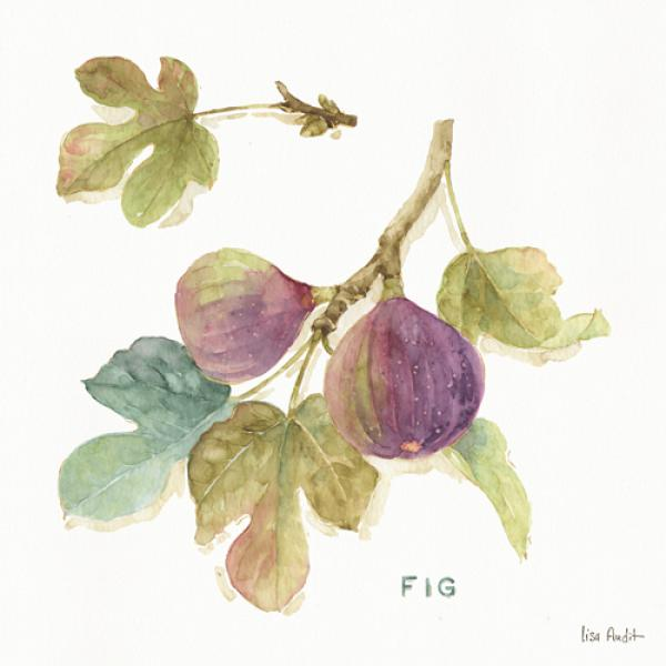 Orchard Bloom III
