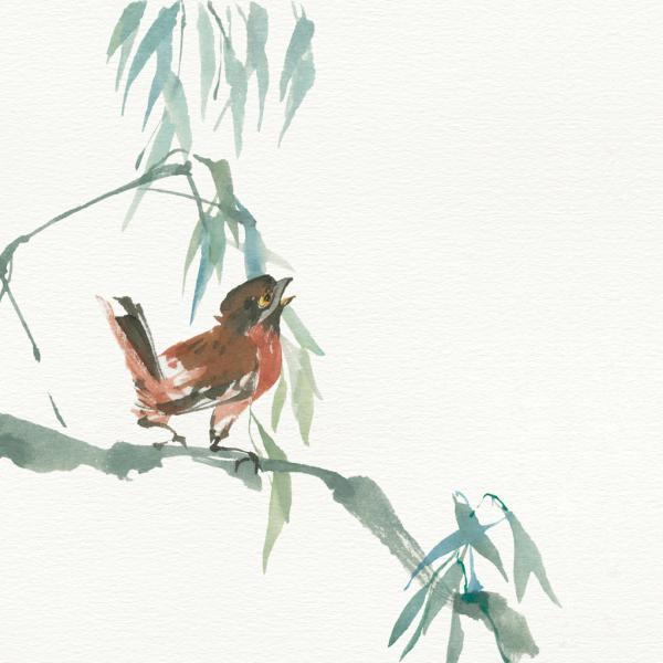 Russet Sparrow