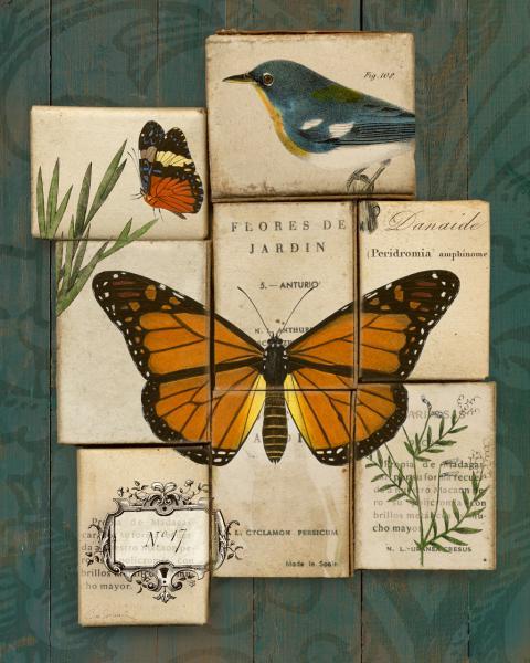 Birds and Butterflies II