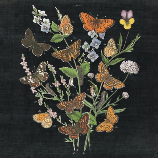 Butterfly Bouquet on Black I
