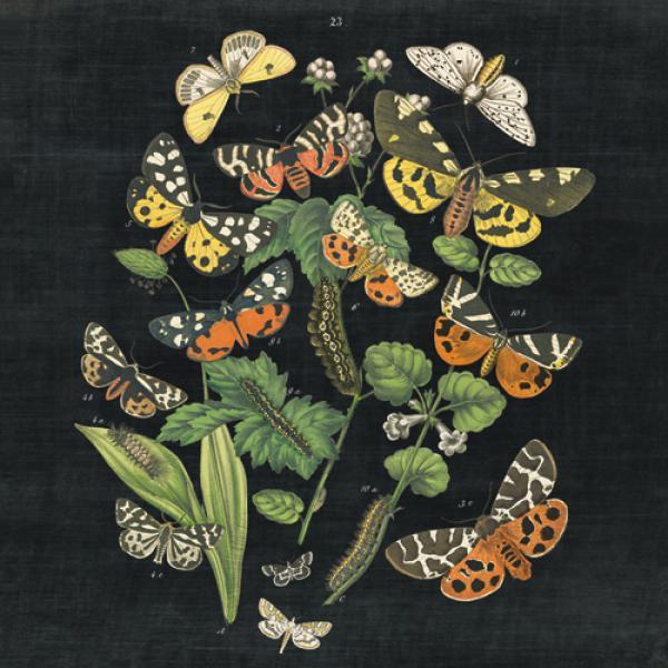 Butterfly Bouquet on Black IV