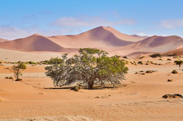 Namib Sandsea