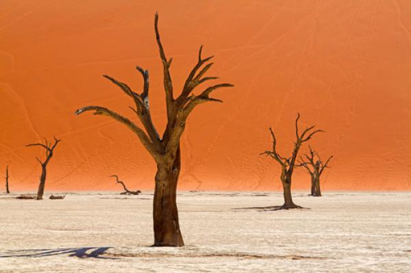 Trees of Deadvlei