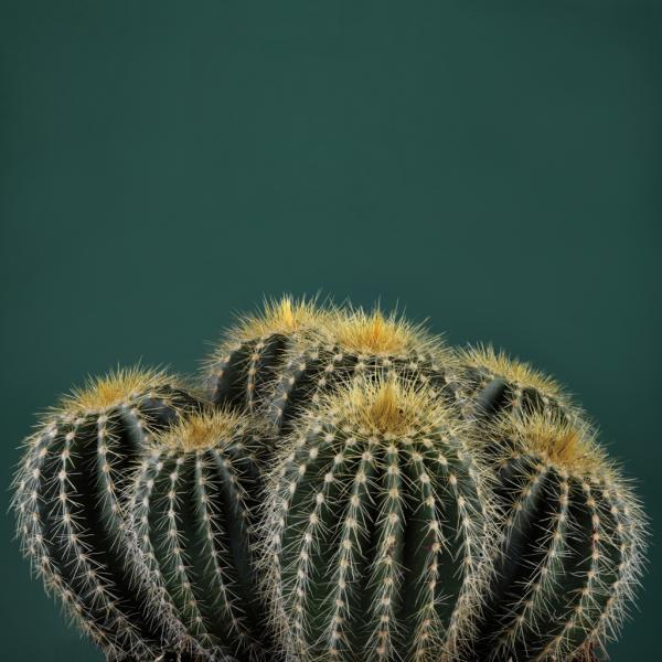 Cacti I