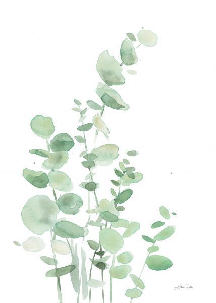 Eucalyptus I
