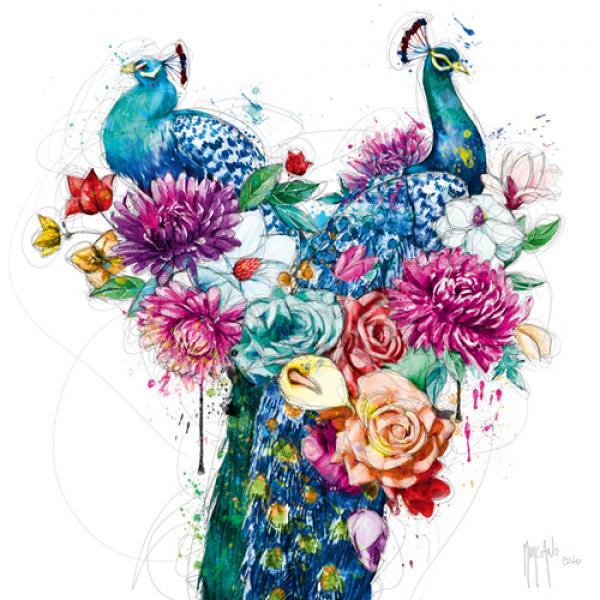 Peacock Flowers