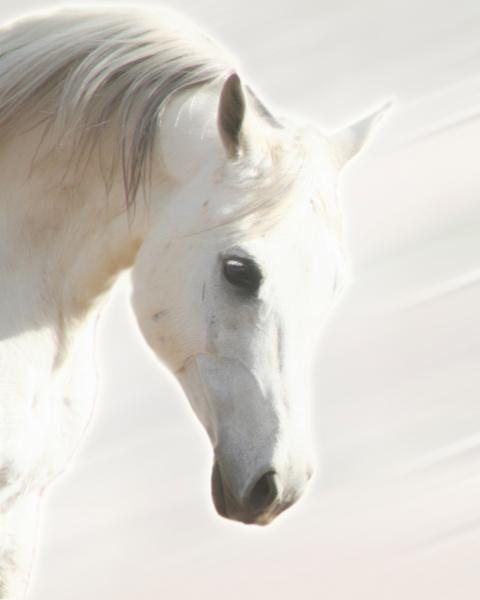 Pegasus III