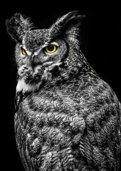 Wisdom Owl II